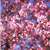 2014-02-24OkameCherry.png